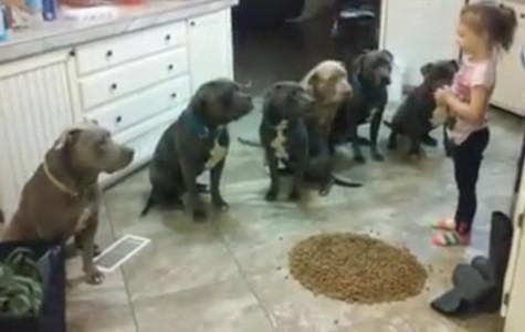 Controversial pet videos: adorable or irresponsible?