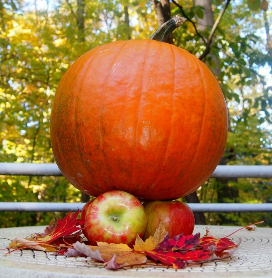 Fall+Flavor+Wars