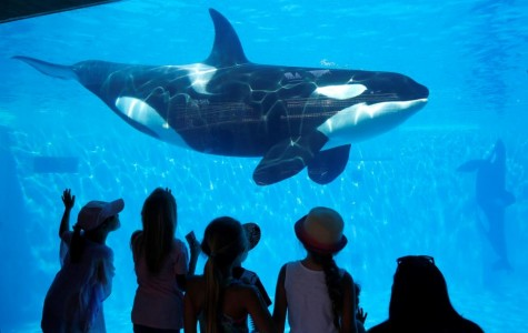 California Coastal Commission bans orca breeding at SeaWorld San Diego