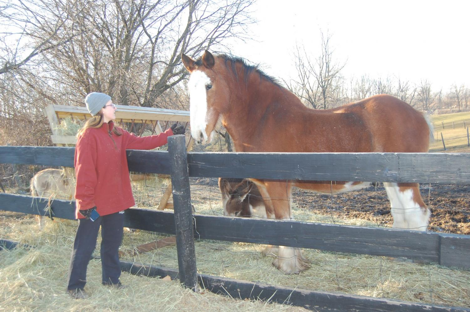 Sydney Puda feeds and cares for Scotty the Horse at the Maybury Farm where she volunteers after school on Tuesdays and Fridays. (Photo credit: Sabrina Yono) Sydney Puda feeds and cares for Scotty the Horse at the Maybury Farm where she volunteers after school on Tuesdays and Fridays. (Photo credit: Sabrina Yono) Sydney Puda feeds and cares for Scotty the Horse at the Maybury Farm where she volunteers after school on Tuesdays and Fridays. (Photo credit: Sabrina Yono)